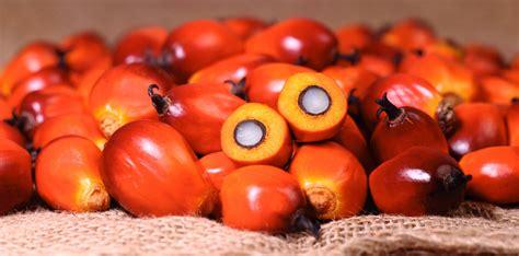 Minyak Kotor Kelapa Sawit kini giliran india mengganjal ekspor cpo indonesia