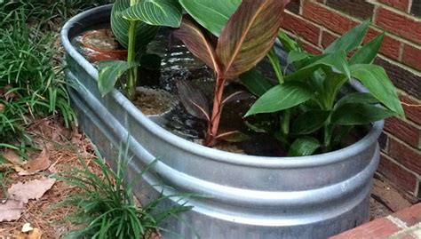 container water garden supplies southeast gardening water container garden