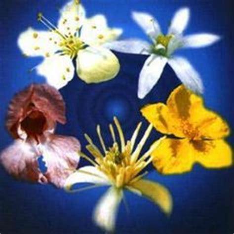 emergency remedy fiori di bach il personaggio sveva sagramola la bellezza parto