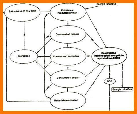 catena alimentare definizione l ambiente marino