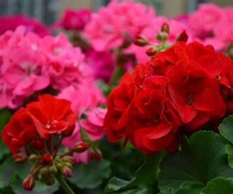 jenis bunga  indah  unik   karangan rumah