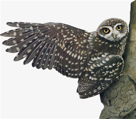 imagenes animales nocturnos buho negro animales nocturnos ave owl png image para