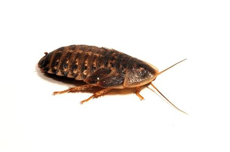Best Feeder Insects feeder insects