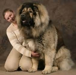 Russian siberian prison dogs images amp pictures findpik