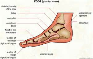 Shoes For Planters Fasciitis by Evoprime Fitness The Quality Of Lifestyle Our Beliefs