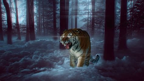 mystic tiger  forest   wallpapers hd wallpapers