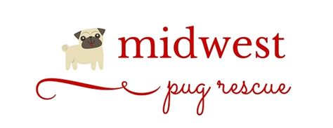 pug rescue midwest midwest pug rescue pet shelter in overland park ks