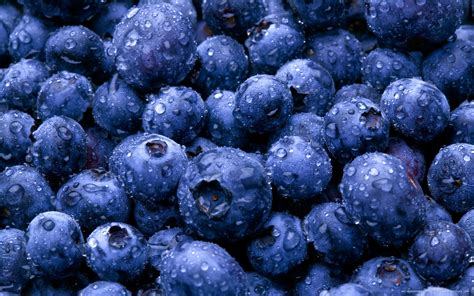 wallpaper blue food download the fresh blueberries wallpaper fresh
