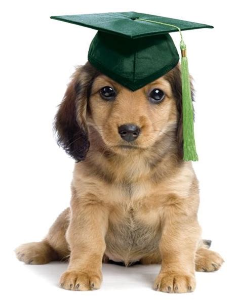 puppy graduation pet theme obedience puppy graduation being posh boutique