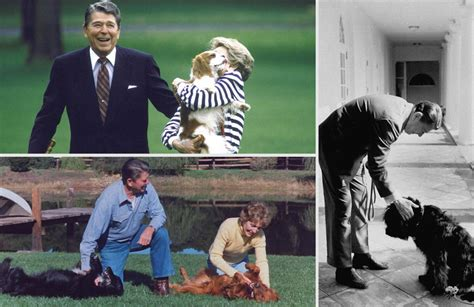 white house dog white house pets pets of the presidents