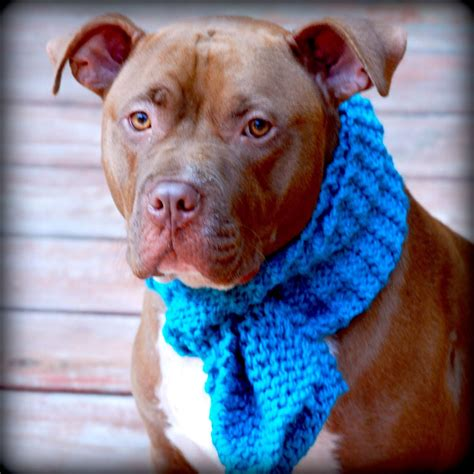 teal scarf for medium to large breeds knit