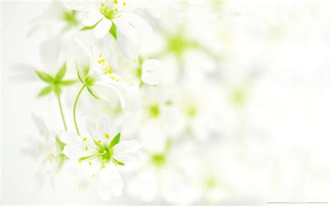wallpaper with flowers flower backgrounds wallpapers wallpaper cave