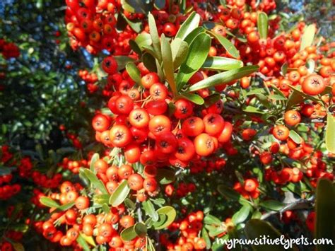fall in texas red berry tree other cool stuff pinterest
