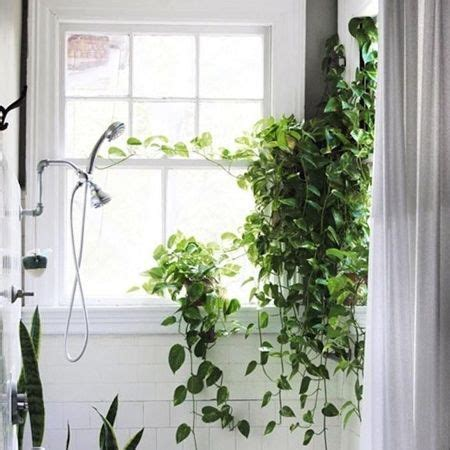 best plants for bathroom with no window best 25 indoor plant decor ideas on pinterest plant