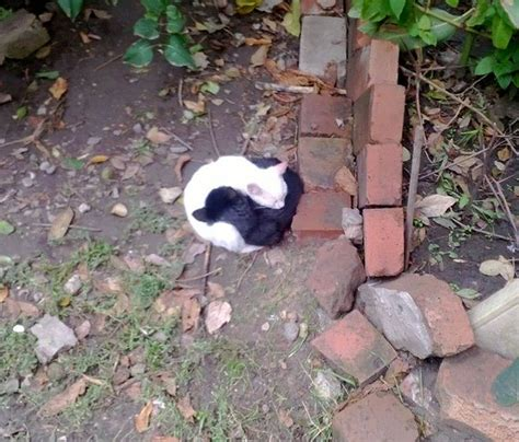 Yinyang Cats 10 yin and yang cats that look purffect together despite