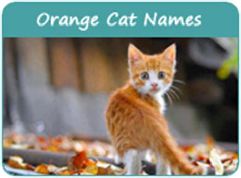 related keywords suggestions for orange cat names