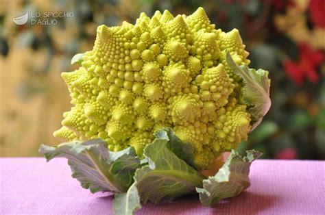 come cucinare il broccolo romanesco ingrediente broccolo romanesco le ricette dello spicchio