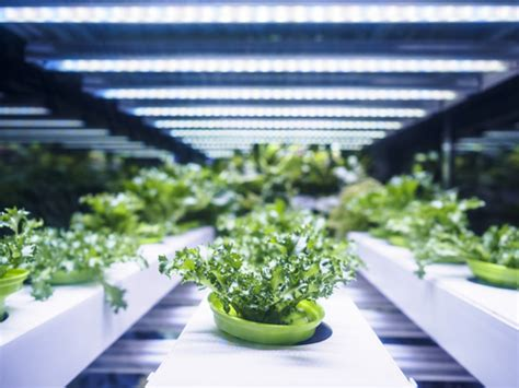 horticultural led grow lights horticulture is blooming again thanks to led lighting