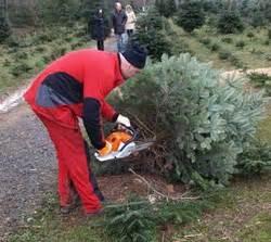 tannenbaum selber schlagen bonn weihnachtsbaum selbst schlagen thema proplanta de