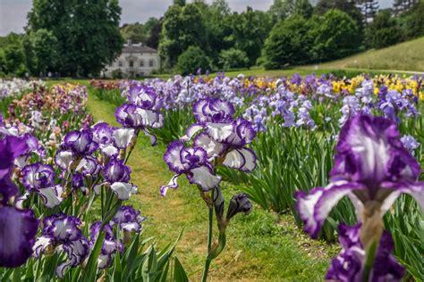 Welche Blumen Im Mai by Bl 252 Tenzauber Schweiz Tourismus