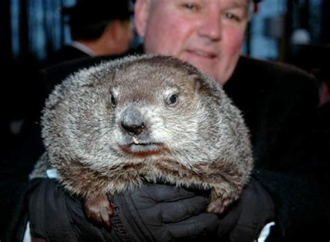 groundhog day yearly results groundhog day 2012 results shadow winter to continue