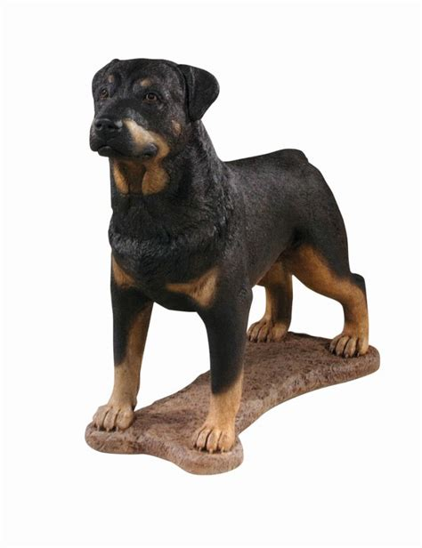 rottweiler statues rottweiler detailed finish cast statue h77cm x w32cm 163 499 99
