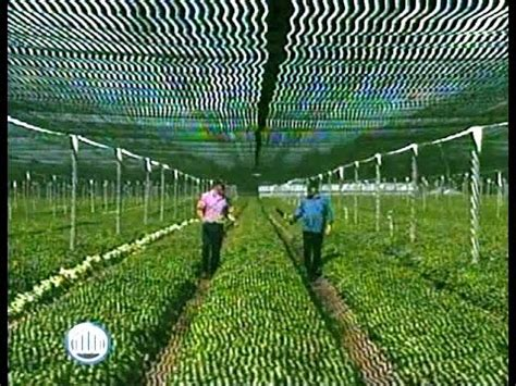 growing ginseng paying dividends youtube