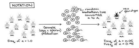 Mechanisms Of Evolution Worksheet