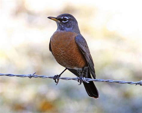 backyard birds in northern illinois flashcards quizlet