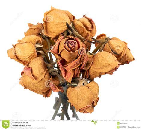 imagenes de rosas secas rosas secas foto de archivo imagen de flor memorias