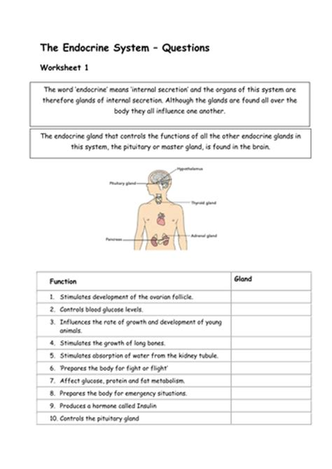 Human Hormones Worksheet by Pictures Endocrine Worksheet Dropwin