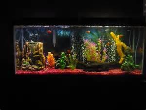 Here is my 55 Gallon Rainbowfish tank.