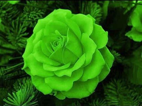 imagens de flores e rosas ensaio ccb com imagens das mais lindas flores youtube