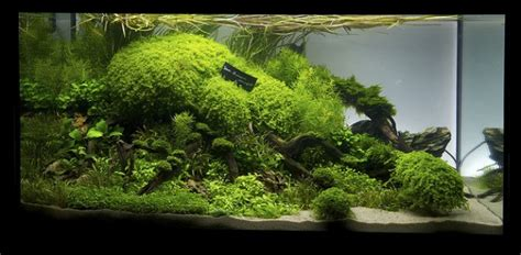 Aquascaping Magazine by Uk Represented In Live International Aquascaping Contest