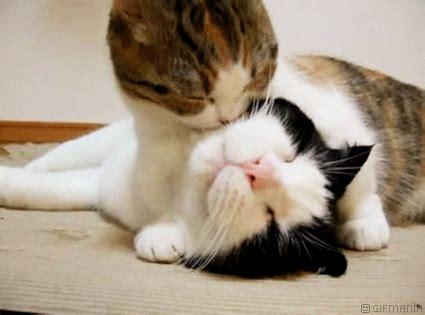 imagenes uñas gatos gifs divertidos de gatos blog de im 225 genes