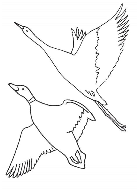 bird flying pencil coloring pages