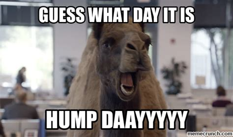 Hump Day Camel Meme - funny hump day memes