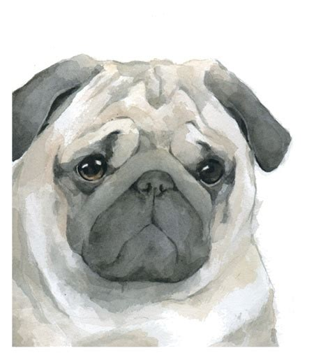 why do pugs pin by matteo tortora on watercolors