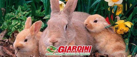 mangimi giardini conigli mangimi giardini giardini spa