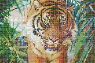 Coral And Turquoise Bathroom Sumatran Tiger Mosaic Tile Art