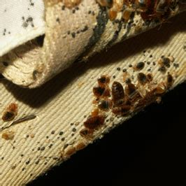 bed bug epidemic bed bug epidemic in the fast growing city of seattle press release digital journal
