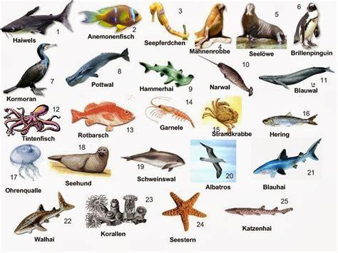 100 ejemplos de animales terrestres y acuticos el aleman no es dificil vocabulario los animales