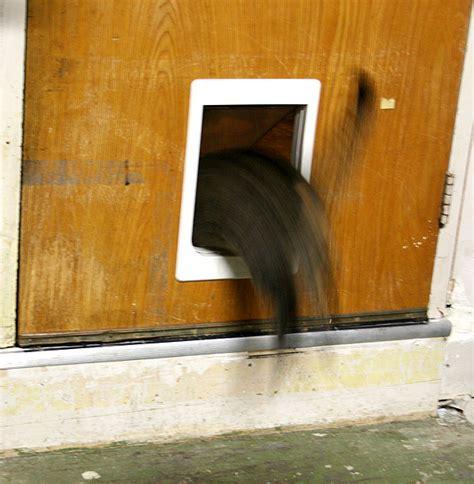 Let S Talk Does Your Cat Use A Kitty Door Catster Cat Door Exterior