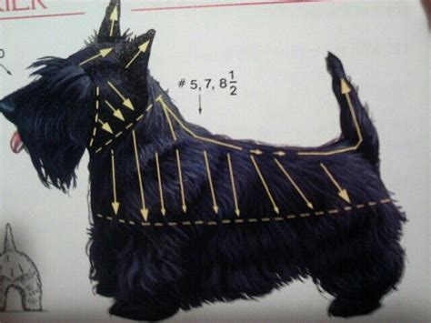 different ways to groom a scottish terrier 141 best images about cute scottie dogs on pinterest