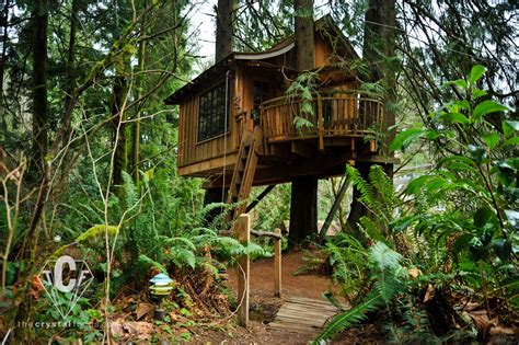 tree house point the tranquilizing treehouse point washington united states world for travel