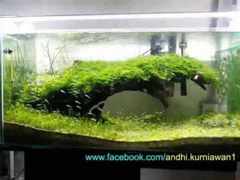 aquascape indonesia natural aquascape indonesia youtube