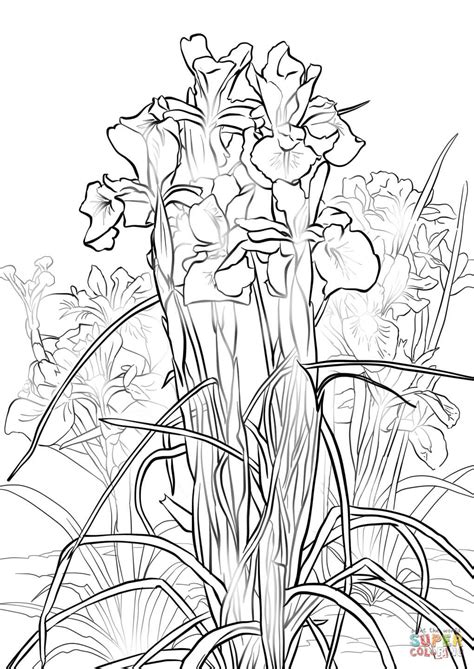 coloring pictures of iris flowers 82 coloring pages of iris flowers iris coloring