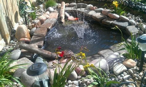 backyard pond with slider turtle water gardens