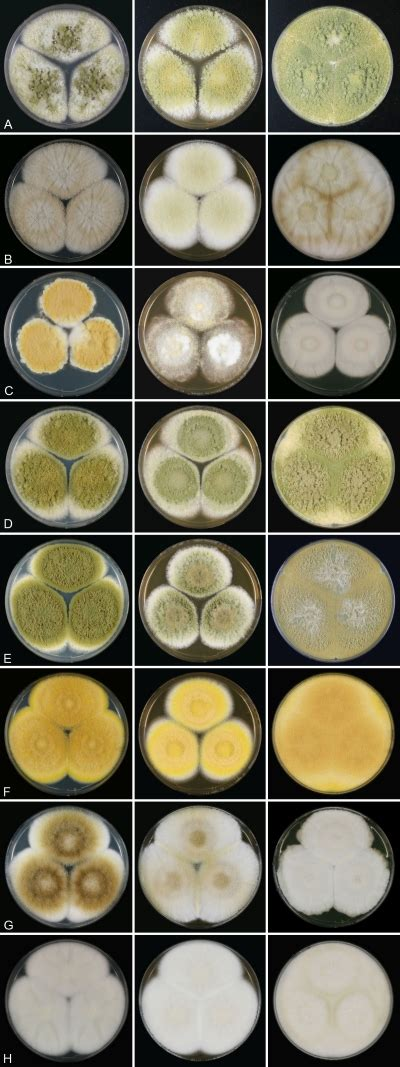 aspergillus section flavi two new aflatoxin producing species and an overview of