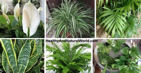 Detox Plants Safe For Cats by 10 Best Air Filtering House Plants According To Nasa Inc